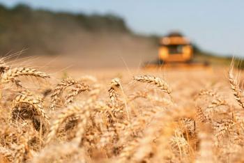 تسليم 28 ألف طن من محصولي القمح والشعير لصوامع الشمال