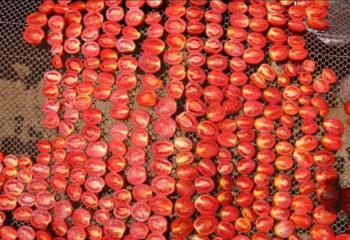 قرية مصرية تشتهر أوروبياً بسبب الطماطم