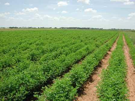 1,4 مليون دينار مخصصات الإقراض لمزراعي الكورة للعام الحالي