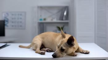 الزيود: العينة الثانية لكلب إربد سلبية