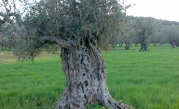 الجمعية الأردنية لرياضة الصيد تحتفل بيوم الشجرة