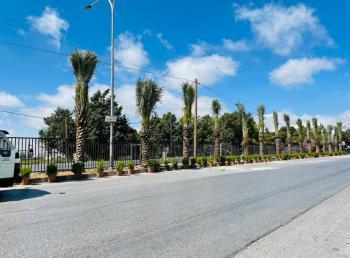 عمان الاهلية تنفذ حملة لزراعة النخيل وتأهيل طريق السرو احتفالا بمئوية الدولة