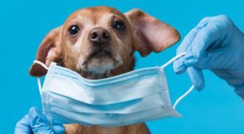 الاطباء البيطريين ترجح سلامة كلب اربد ..  وتؤكد: لا ينقل كورونا للانسان