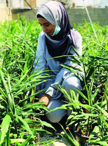 فلسطينية تتحدى البطالة بزراعة الزنجبيل