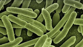 العثور على 70 ألف فيروس لم يسبق لها مثيل في الأمعاء البشرية