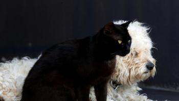 بيانات كورية جنوبية: أعداد القطط والكلاب المستوردة تضاعفت