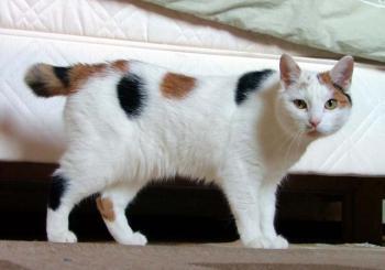 قطة تنقذ أسرة كركية من موت محقق