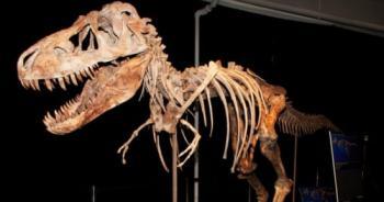 الصين: اكتشاف حفرية ديناصور عمرها 200 مليون سنة