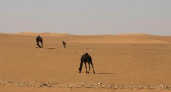 مشهد نادر لصحراء السعودية خلال الأمطار
