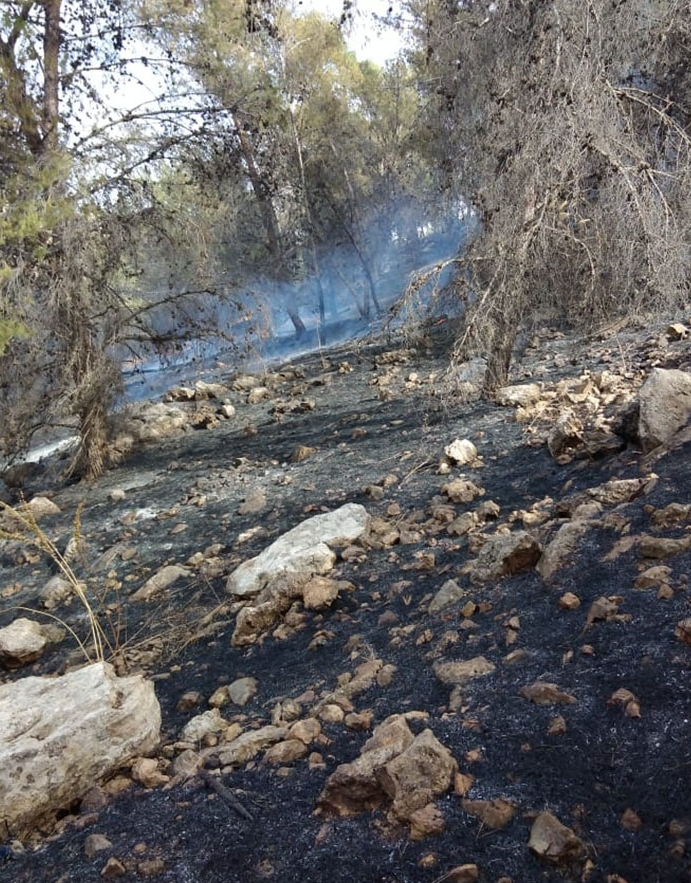 الكورة: اخماد حريقين أتيا على أشجار حرجية ومثمرة
