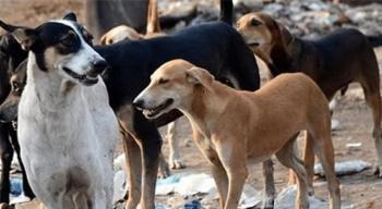 عزل كلب مصاب بكورونا 14 يوما بمنطقة حرجية في إربد