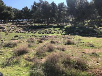 الازايدة: 50 دونما لانشاء متنزه الفيصلية في مأدبا