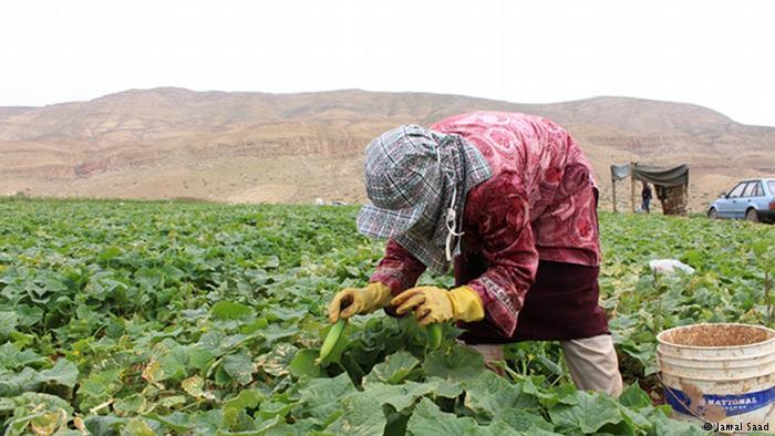 800 مليون دولار خسائر الفلسطينيين سنويا في مناطق الأغوار
