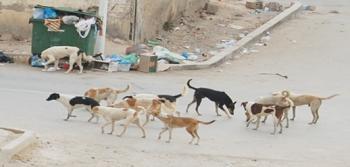 مأوى لكلاب العقبة الضالة