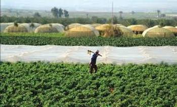 مدير زراعة الزرقاء يطلع على مشاكل مزارعي الزيتون بالأزرق