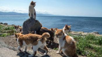 طرد جماعي لعشرات القطط في اسبانيا