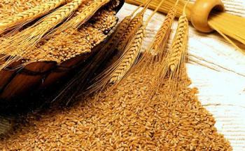 الصناعة والتجارة تطرح عطاء لشراء 120 ألف طن من القمح