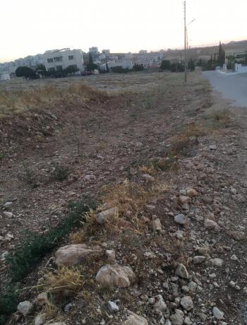 أعمدة كهرباء تعيق تعبيد شوارع في شفا بدران