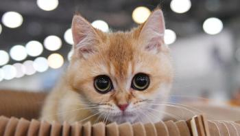 هل يمكن لحساسية القط إنقاذك من حالة كورونا الشديدة؟