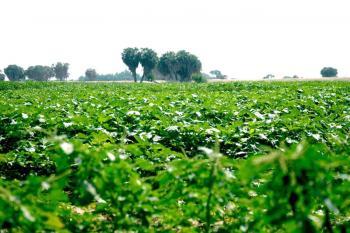 مستثمرون قطريون يدرسون تنفيذ مشروعات زراعية في الأردن
