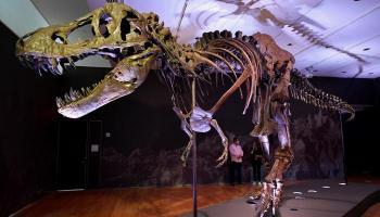 ديناصور للبيع والسعر المتوقع مفاجأة