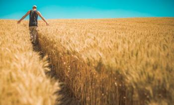انخفاض انتاجية المحاصيل الحقلية بالطفيلة لأدنى مستوياتها