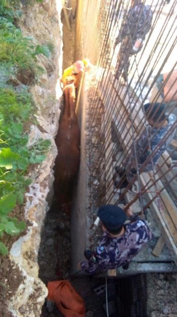 انقاذ حصان سقط داخل حفرة في الياسمين