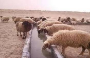 مربو الماشية يشكون من تعطل 3 آبار مخصصة لسقاية المواشي في الرويشد