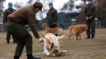 دراسة: الكلاب تستطيع كشف المصابين بكورونا