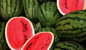 الزراعة: البطيخ الأردني سليم والمنتج المحلي الاكثر جودة في المنطقة