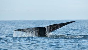 اكتشاف هيكل عظمي نادر لحوت يقدر عمره بـ5 آلاف عام