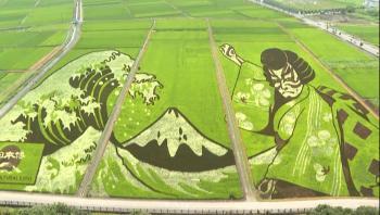 اليابان ..   ..  تحويل حقول الأرز إلى لوحات فنية خضراء