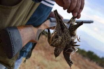 ورشة حول التصدي للصيد غير القانوني للطيور والاتجار بها
