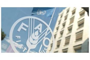 فاو: استمرار ارتفاع أسعار الغذاء عالميا للشهر الثالث على التوالي