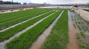 زراعة إربد تدعو للاستعداد للموسم الزراعي الشتوي