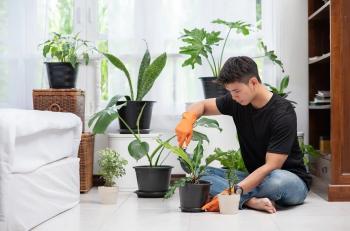 5 تطبيقات تساعدك في المحافظة على النباتات المنزلية
