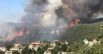 حريق بغابات عكار في لبنان