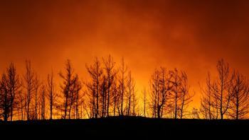 الرئاسة التركية: حرائق الغابات كارثة وطنية