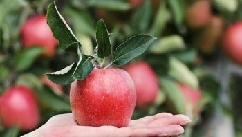 6  آثار جانبية محتملة للإفراط في تناول التفاح