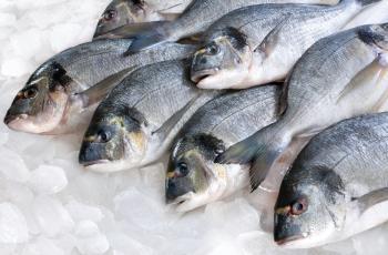 مطلوب توريد اللحوم والاسماك المبردة والطازجة لجامعة العلوم والتكنولوجيا