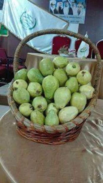 الاردن  ..  مهرجان الجوافة الوطني