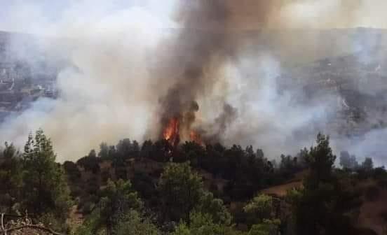 اخماد حرائق أشجار حرجية ومثمرة في عجلون (صور، فيديو)