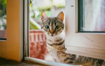 واشنطن أول مدينة في العالم تحصي قططها