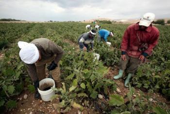 تعليمات تفتيش النشاط الزراعي تفرض عقوبات على اصحاب العمل