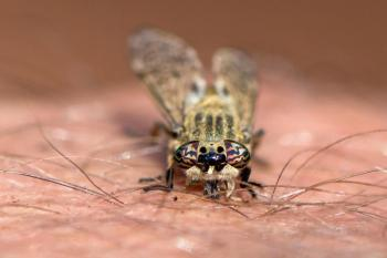 ذباب حامل للأمراض يغزو التجمعات في بريطانيا والسلطات تحذر