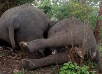 صاعقة تقتل 18 فيلاً في الهند بثوانٍ