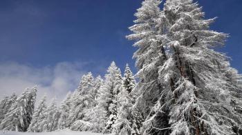 مقتل متسلق جبال إيطالي شهير بانهيار ثلجي