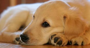 كلب يسرق آيس كريم من الثلاجة ..  فيديو