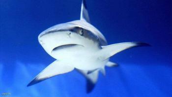 تحذير في جنوب افريقيا من أسماك القرش