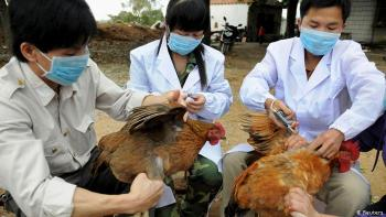 الصحة العالمية تحسم جدل تفشي إنفلونزا الطيور بين البشر